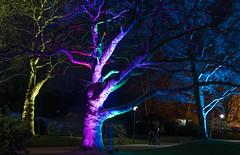 Parkleuchten 2018  -21 (Franiko Foto) Tags: gruga park essen parkleuchten licht farbe