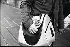 (Carry Me) (Robbie McIntosh) Tags: leicam2 leica m2 rangefinder streetphotography 35mm film pellicola analog analogue negative leicam summicron analogico leicasummicron35mmf20iv blackandwhite bw biancoenero bn monochrome argentique summicron35mmf20iv autaut dyi selfdeveloped filmisnotdead leicasummicron35mmf2iv strangers candid guessexposure sunny16 nometering kodaktrix kodak trix pulcinella d76 dog doggie puppy hand