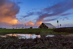 (djerniganphoto) Tags: landscape sunrise clouds redwoods barn cows reflections pnw california humboldt nature color flickrunitedaward