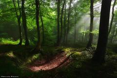 Signs (Hector Prada) Tags: bosque niebla verano sol arboles luz mágico momento hojas hayedo forest fog summer sun trees light magic moment señales signs leaves hectorprada naturaleza nature sunbeams woods paísvasco basquecountry