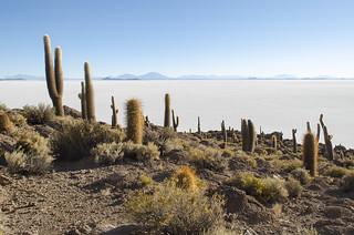 Isla Incahuasi (Uyuni, Bolivia)