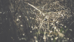 PB_012618_35 (losing.today) Tags: brianyoung oregon pacificnorthwest portland pdx portlandoregon portlandor winter nature outdoors naturepark plantlife plants moodyseason darkseason losingtoday grass grassstudies