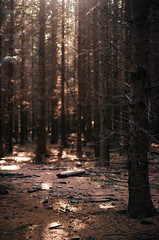 enjoy the silence (analogrem) Tags: pine forest trees woods nature needles cones sunlight silence calness fragrance analog film wanderlust branches twigs sunbeam floor spots light wood tree