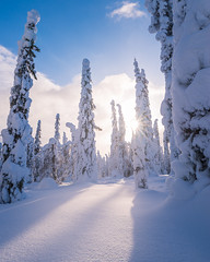 Snowy view (laurilehtophotography) Tags: 2018 posio riisitunturi talvi suomi finland winter landscape view nature snow ice cold day sky clouds sun sunstar forest nikon d610 sigma 20mm art wideangle amazing europe maisema luonto metsä tunturi