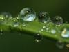 Regentropfen 4 (dr.klaustrumm) Tags: reflexionen regentropfen ledlicht wasser natur gras pflanze