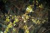 Little Things (moaan) Tags: kobe nagano japan jp flower flowering flora littleflowers winter january aflowerwithnoname dof bokeh bokehphotography leica mp leicamp type240 summicron50mmf20dr leicasummicron50mmf20dr 50mm f20 utata 2018