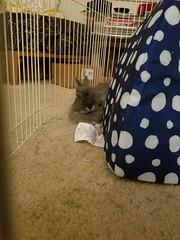 Max (Pinky Earl) Tags: rabbit bunny conejo usagi lapin bun