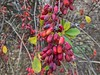 WP_20171205_09_24_59_Pro (vale 83) Tags: berries microsoft lumia 550 friends coloursplosion colourartaward