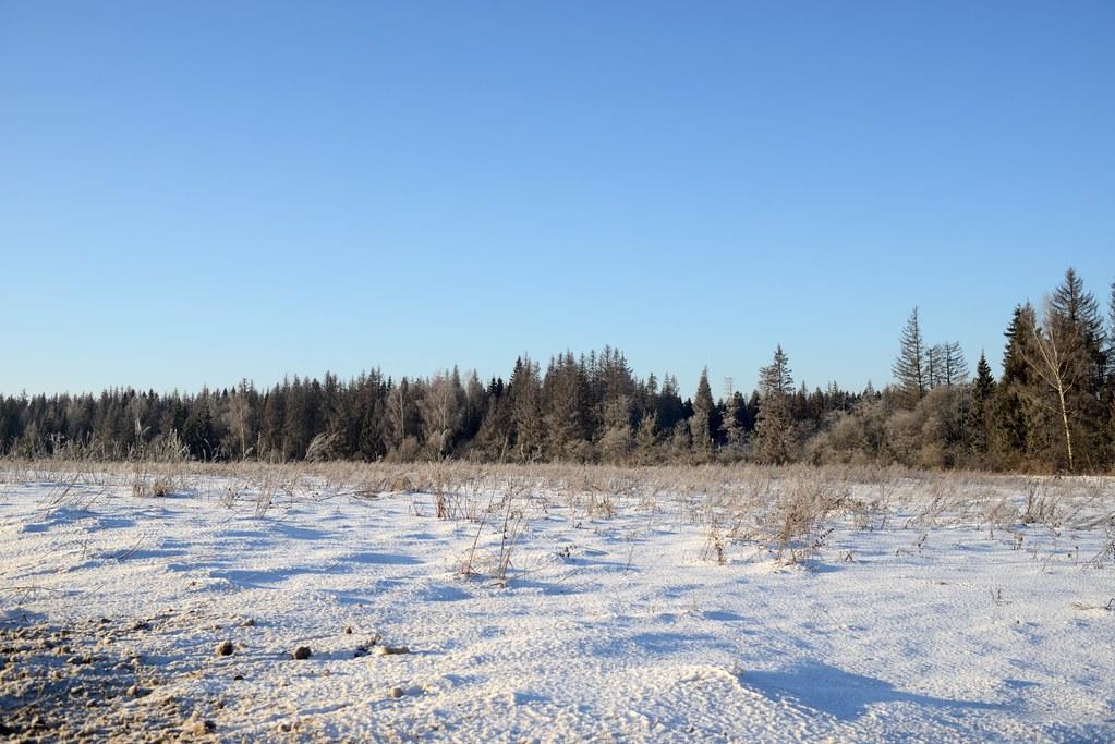 фото: Snow field