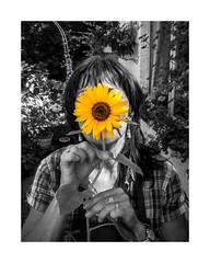 Maman tournesol (Kimoufli) Tags: maman mother tournesol fleur jaune gris monochrome jardin garden portrait couleursélective nature noiretblanc blackandwhite