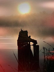 The birth of a new day. (mabumarion) Tags: fromthearchive dewittsee newday morning birth scentofmorning haze curtain morningdew reed pier silhouettes duck lake sunrise