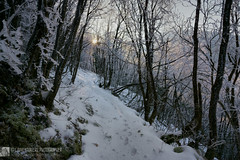 Ultima luce dal sentiero Frassati (EmozionInUnClick - l'Avventuriero photographer) Tags: bosco inverno monteacuto orme sentiero sentierofrassati tramonto sonya7riii