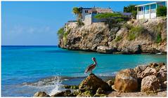 Pelican at Praya Piskadera (michielpols) Tags: pelican bird birds sea ocean blue coral dive snorkeling rocks sky palm panasonic lumix gx80 gx85 micro four thirds mft travel holiday curacao island caribean