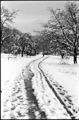 Ailleurs, bien loin d'ici (Rachelnazou) Tags: caffenol blackwhite minolta film ilford snow analog argentique