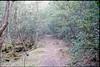 (✞bens▲n) Tags: pentax lx kodak e100g fa 43mm f19 limited film analogue slide japan yamanashi aokigahara forest woods path trees