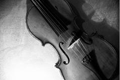 Violin (fotoservice18) Tags: music violin black white shadow free feel f string classic instrument strumento musicale suonare suono wood legno arte classica suonatore musicista opera acuto