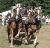 Pferdestark Detmold (ow54) Tags: pferde pferdestark kaltblüter gespann carriage horses