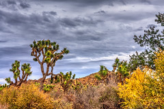 Joshua Tree National Park (aaron_j_o) Tags: joshuatreenationalpark hdr nature clouds colour colors contrast blue desert grass green inspiration hill mountain orange outdoors peace plants purple rain road rocks sky storm weather yellow