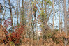 Trees In Our Backyard. (dccradio) Tags: lumberton nc northcarolina robesoncounty outdoors outside nikon d40 dslr nature natural tree trees greenery landscape treeline tallgrass growth brush sky bluesky clouds