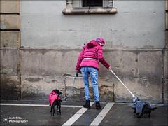 Walking the dogs (Melchita) Tags: streetphotography street streetcolor streetphotographycolor streetscenes colorphotography urbanphotography urbanlife urbanscenes melchita spain