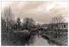 La Dyle (Jean-Marie Lison) Tags: eos80d louvain leuven dyle rivière noiretblanc nb monochrome