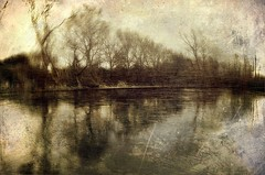 Trees Reflected (Bill Eiffert) Tags: trees nature texture reflection cold textured