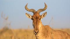 Nairobi-Nationalpark-0546 (ovg2012) Tags: kenia kenya nairobi nairobinationalpark
