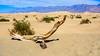Death Valley National Park California . Mesquite Flat Sand Dunes (Feridun F. Alkaya) Tags: zabriskiepoint nps ngc deathvalleynationalpark california coyote usa nationalpark sanddunes jackal desert dvnp deathvalley mesquiteflatdunes dunes saltflats salt