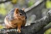 Squirrel saying hello before dashing off (Minder Cheng) Tags: squirrel blakegarden kensington california unitedstates us