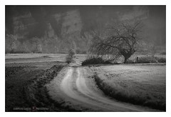 Dust road (GP Camera) Tags: nikond80 nikonafsdx18105mmf3556gedvr landscape paesaggio view veduta countryside campagna road strada dust polvere wind vento trees alberi fields campi grass erba rocks rocce winter inverno light luce lighteffects effettidiluce shadows ombre textures trame vignetting depthoffield profonditàdicampo silence silenzio quiet quiete calm calma bw biancoenero monochrome monocromo shades sfumature whiteframe cornicebianca italy italia piemonte monferrato darktable gimp opensource freesoftware softwarelibero digitalprocessing elaborazionedigitale