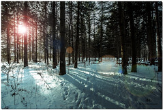 DECEMBER 2017  NGM_6988_3630-1-223 (Nick and Karen Munroe) Tags: snow sun sunlight sunset sunsetting sunburst setting settingsun snowfall snowstorm snowy winter wintertrees winterstorm wintry winterwonderland wintery forest woods canada clouds color colour colors colours conservation beauty brampton beautiful blue hike heartlakeconservationarea heartlake heartlakeconservation nikon nickmunroe nickandkarenmunroe nature nickandkaren nick nikond750 d750 1424 1424f28 nikon1424f28 munroedesignsphotography munroedesigns munroephotography munroe karenick23 karenick karenandnickmunroe karenmunroe karenandnick karen landscape ontario outdoors ontariocanada