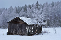 Winter barn (Stefano Rugolo) Tags: stefanorugolo pentax k5 smcpentaxm50mmf17 winter barn countryside landscape snow tree field vintagelens hälsingland sweden sverige pentaxk5 ricohimaging wood sky cabin building forest