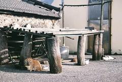 (YL.H) Tags: 馬崗 漁港 貓 底片 貢寮 canon cat film analog fujicolor taiwan fishingport