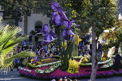 Miracle Gro float (Thad Zajdowicz) Tags: zajdowicz pasadena california roseparade 2018 usa outdoor outside canon eos 5dmarkiii 5d3 digital dslr color colour festive availablelight lightroom ef70200mmf4lisusm miraclegro flower huge purple parade street urban people garden