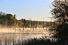 Lake in low line fog (Steve InMichigan) Tags: lake lowfog wetland michiganstateland morningfog sunrisefog fog water trees fogline standingdeadtrees marsh shallowlake