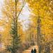 Autumn in Edmonton