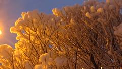 IMG_4374 (Mr Thinktank) Tags: raureif frost