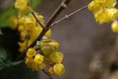180124013 (murbozero) Tags: murbo japan flower