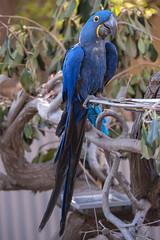 Samson in his New Home. (LisaDiazPhotos) Tags: macro micro samson macaw his new home sdzsafaripark sdzoo sdzsp sandiegozoo sandiegozooglobal sandiegozoosafaripark lisadiazphotos