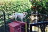 Lilica em sua casínea >.< (PsycheRed) Tags: dog cutedog lilica cão cachorro cadela doghause casinha nikon d3300 animal