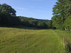 Field next to River Teign, near Teign Gorge, in evening sunshine (Philip_Goddard) Tags: europe unitedkingdom britain british britishisles greatbritain uk england southwestengland devon dartmoornationalpark drewsteignton teignvalley teigngorge evening field