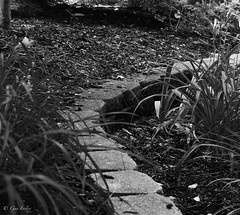 Garden Wall (Gay Foster) Tags: wall blocks curve black white gay foster
