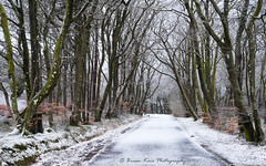The Colours Of Winter (.Brian Kerr Photography.) Tags: scotland scottishlandscapes scottish scotspirit scottishlandscape trees dumfriesandgalloway formatthitech landscape gallowayforest dumfriesgalloway briankerrphotography briankerrphoto landscapephotography winter weather snow tree nature naturallandscape natural outdoor outdoorphotography opoty onlandscape coldmorning sunday forest freezing zeiss a7rii wood woodland road trail park
