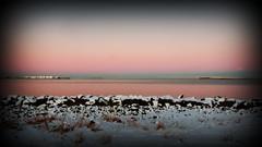Fading (Reykjavik, Iceland) (armxesde) Tags: pentax ricoh k3 island iceland reykjavik winter schnee snow red rot wasser water atlantik atlantic ocean bay bucht faxa himmel sonnenaufgang dämmerung twilight