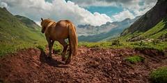 Cruzando la frontera... (Giacomo della Sera) Tags: caballo horse frontera border landscape paisaje luz light valle valley españa europe spain europa hierba grass verde green azul blue