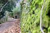 Batuecas Path (Edu Coquer) Tags: batuecas laalberca senderos paisajes landscapes wild nature senderismo naturaleza retriever golden goldenretriever dogs perros mascotas pets