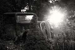 HIDING (Ageeth van Geest) Tags: nl dutch holland 7dwf oldcar eveningsun light monochrome blackandwhite bw sundaylights
