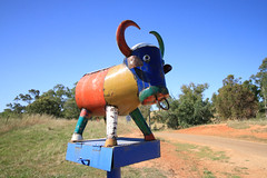 A Day in Muttama (Jungle Jack Movements (ferroequinologist)) Tags: muttama nsw new south wales riverina cootamundra rural country outback farm land heart grain cattle sheep grazing soil town hall village community party celebration fire brigade service bushfire wildfire shed colour color letterbox bull farmer property harvest harvester reaper gatherer strip combine crop yield produce reap sow pick plant grow wheat oats barley field paddock tractor truck team market acre fence dust hay bale load stack tinder drought flood track milk can drum horn