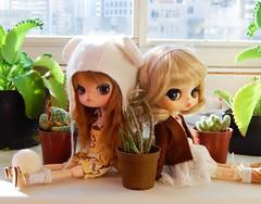 Rownie & Minzy (Pliash) Tags: dal doll cute kawaii byul eris custom madeleinedollies madeleine dollies japanese asian fashion dolls plastic pullip groove family plants cactus cacto suculenta planta