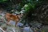 Exploring a Valley 2 (Bob Hawley) Tags: nikond7100 chinesenewyear asia taiwan taitung outdoors dawutownship jinlonglake dogs pets taiwantugou winter nikon2870mmf3545afd forest trees rocks valleys evening